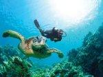 Aquatastic Dive School