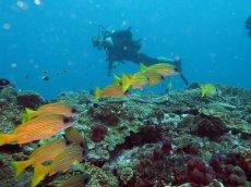 Normalair Underwater Club