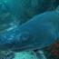 Pro Dive Port Elizabeth